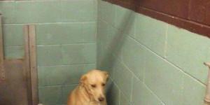 Самая грустная в мире собака умирает от горя: ее снова бросили