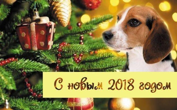 2018-й год на носу: актуальная информация о том, год какого животного по восточному календарю приближается