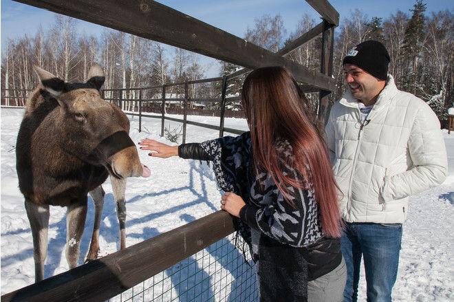 Участники «Дома-2» удочерили дикую лосиху