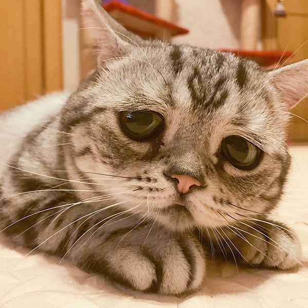 На смену сердитому коту: Луху из Китая – самая грустная кошка в мире