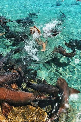 Акула чуть не съела Instagram-модель во время фотосессии