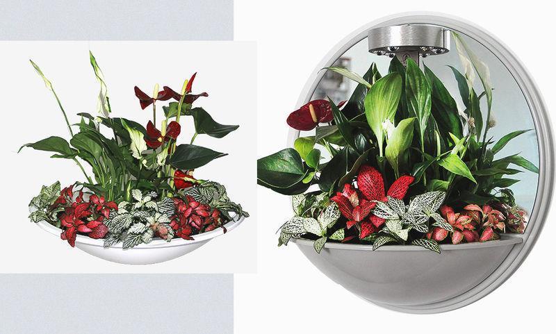 5 способов обновить интерьер с помощью флорариума