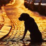 Пес заплакал как ребенок, впервые увидев потерянного хозяина