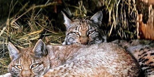 Вместе теплее: как звери из зоопарка проводят зиму