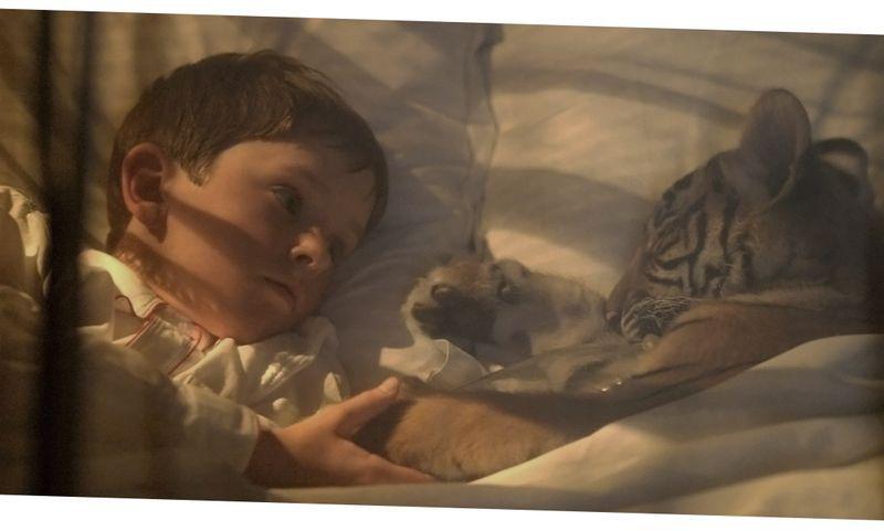 6 красивых художественных фильмов о животных