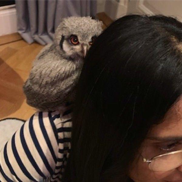 Причуды звезд: Сальма Хайек завела дома живую сову