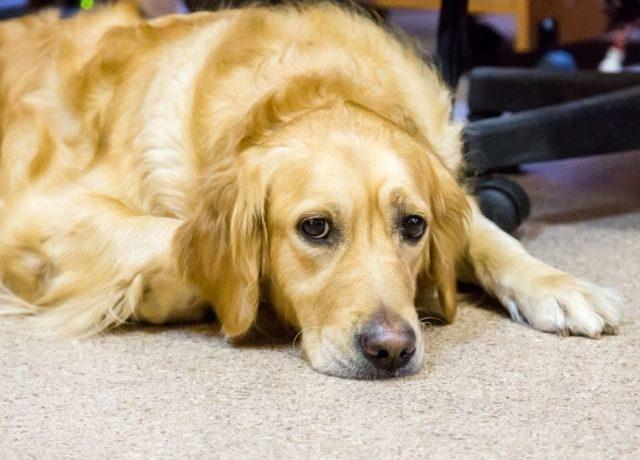 """Собака """"заплакала"""" во время трогательной сцены из мультфильма """"Король Лев"""""""