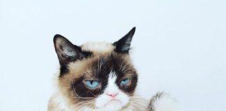 Умер сердитый кот из мемов