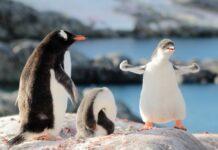 На край Земли к пингвинам и морским котикам — зачем ехать в Антарктиду