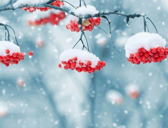 Стало известно, когда в Украине выпадет первый снег
