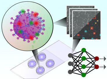 """Ученые из Оксфорда разработали новый """"пятиминутный"""" тест на коронавирус"""